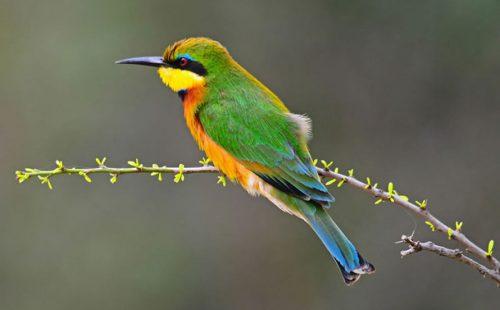 15 Days Uganda Bird Watching Safari