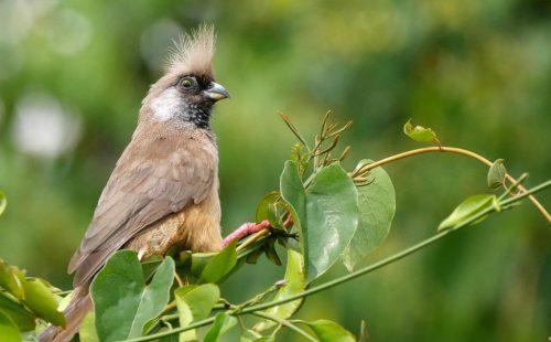 12 Days forest Bird Watching Safari