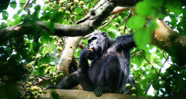 Kibale Forest National Park - 10 Days Best of Uganda Adventure Safari