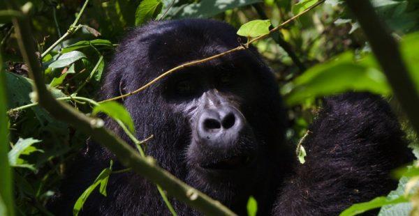 3 days rwanda gorilla tracking safari