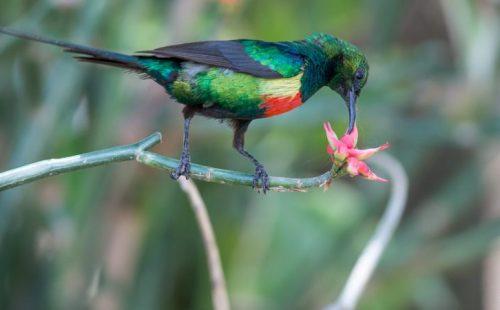 8 Days Bird Watching Safari