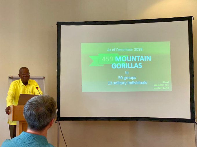 Census shows Mountain Gorilla Population increases to 1063 individuals